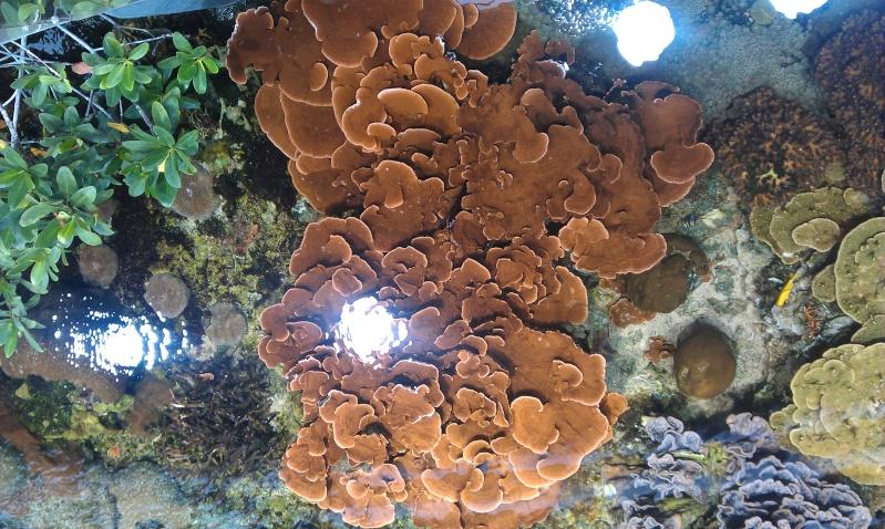 aquarium de Boulogne sur mer Imag0519