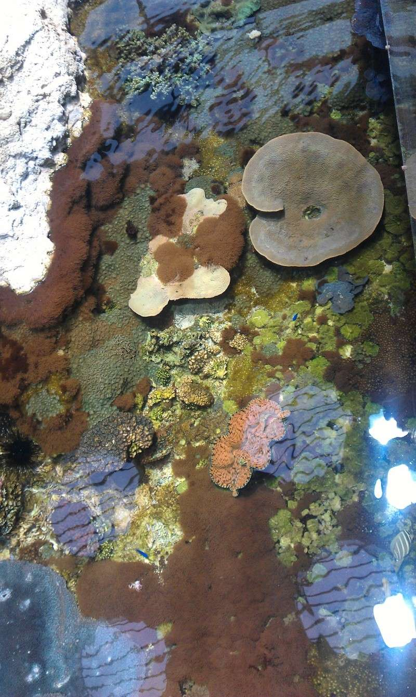 aquarium de Boulogne sur mer Imag0520