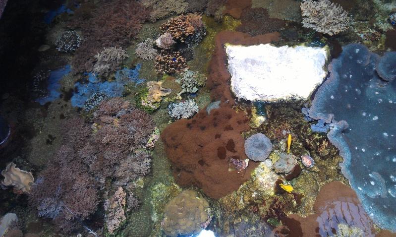 aquarium de Boulogne sur mer Imag0521