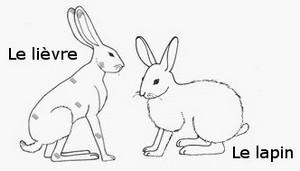 """Chine, année 2O11 : Faut-il traduire """"l'année du lapin"""" ou """"l'année du lièvre"""" ? Lievre10"""