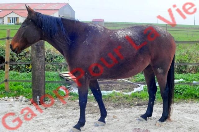 PETRA - TF née en 2003 - adoptée en novembre 2013 par Lenaïck Petra410