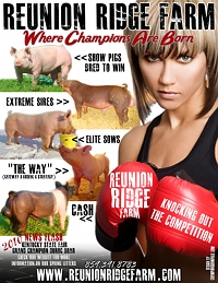 Champion Show Pigs - Forums,advertising, videos, o - home Reunio10