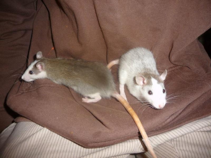 Lisa et ses 7 ratons 92349910