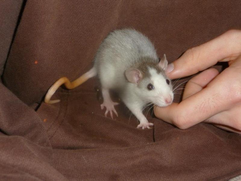 Lisa et ses 7 ratons 94237610