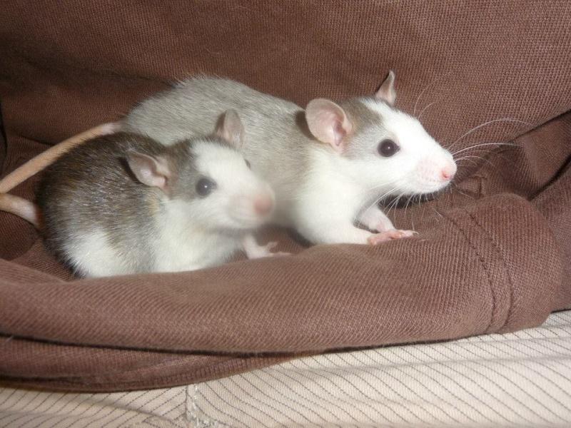 Lisa et ses 7 ratons 94520410