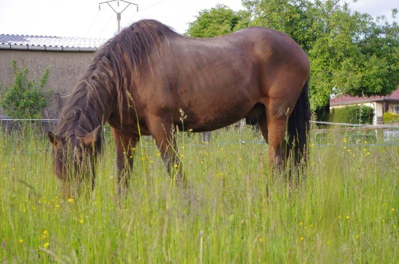 La silhouette du vieux cheval - Page 16 96576611