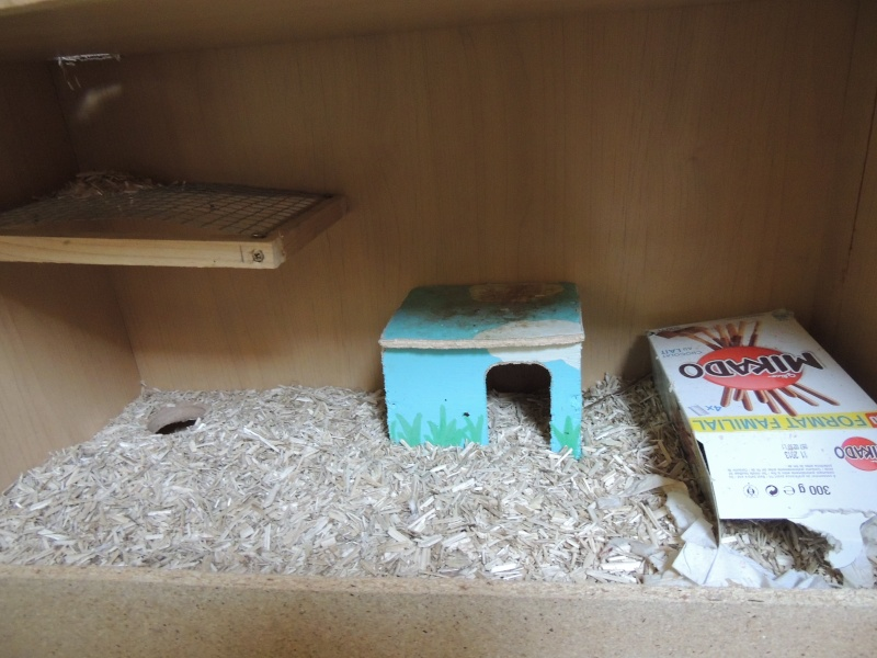 Ma Cage maison Dscn1512
