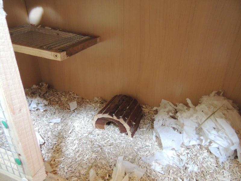 Ma Cage maison Dscn1513