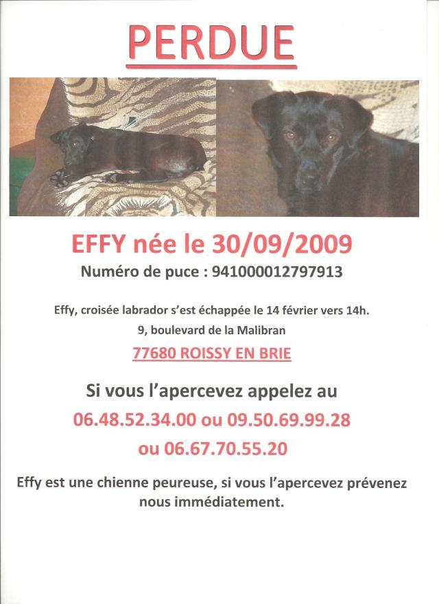 PERDUS- deux chiens ex-roumains en accueil en France Effy1010
