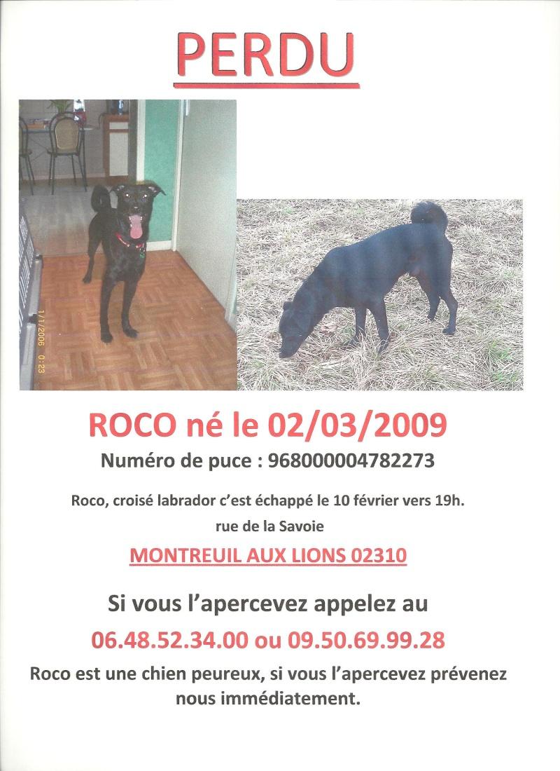 PERDUS- deux chiens ex-roumains en accueil en France Roco1010