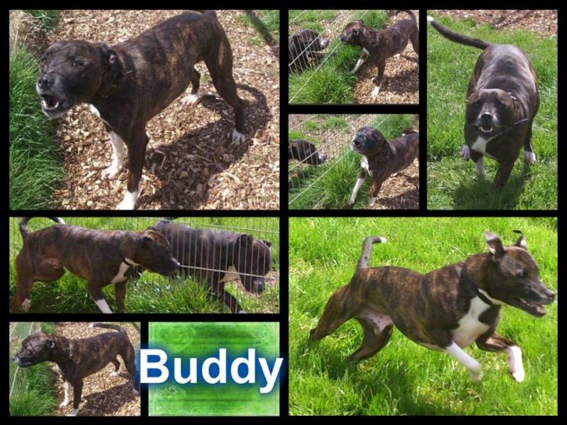 Buddy saved on 11 th hour Buddy_10
