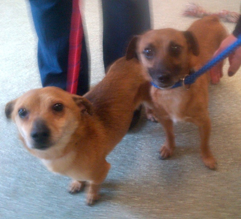 Pinky and Perky needs rescue space together PTS day 5/6  SAFE Pinky_10