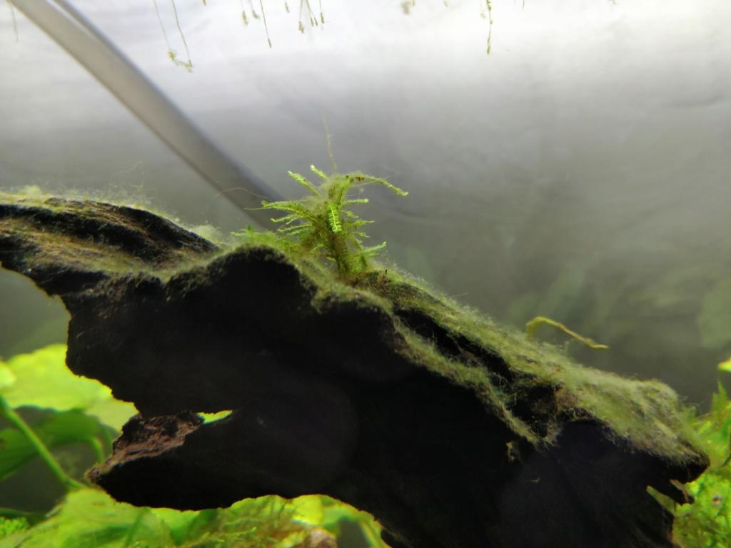 [HELP] identification algue Img_2019