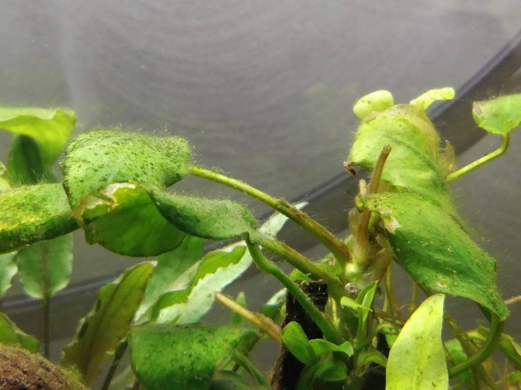 [HELP] identification algue Img_2020