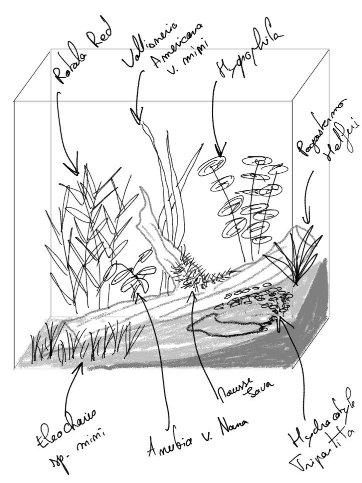 Projet nano encastré bis Plante10