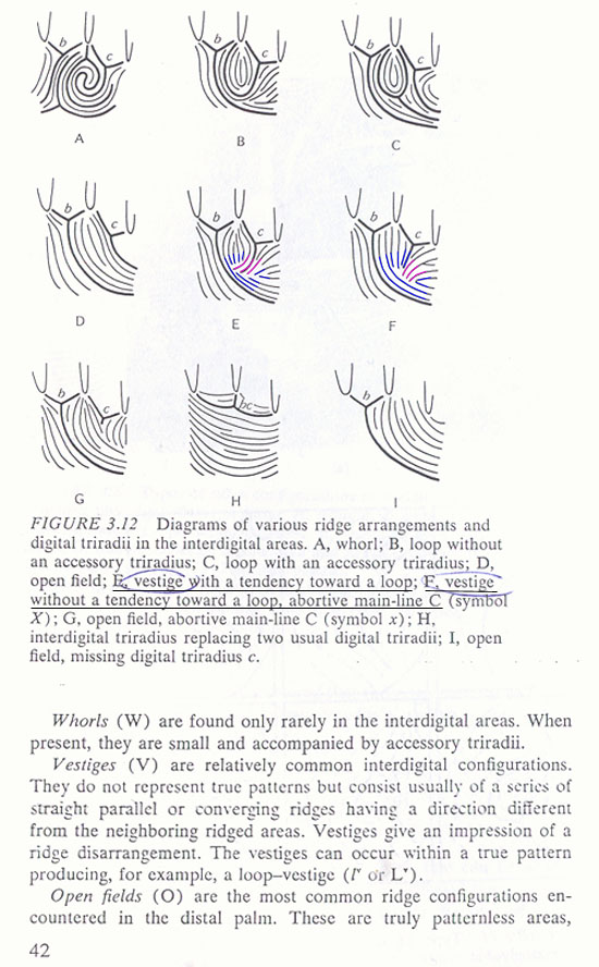 Is this a comb pattern or no pattern in mercury mount  - Page 2 Vestig11