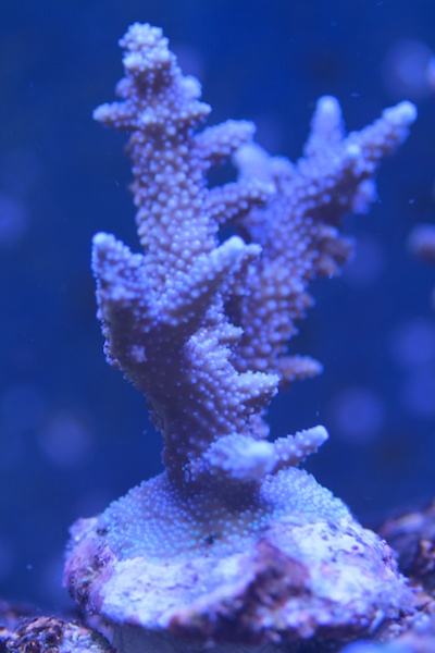 My piece of reef Img_2320
