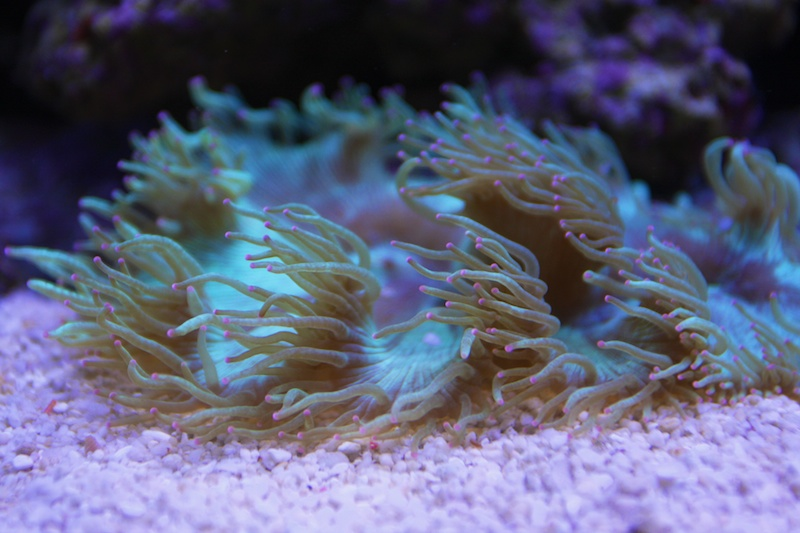 My piece of reef Img_3612