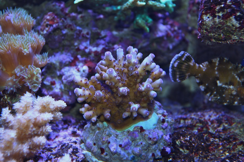 My piece of reef Img_3613