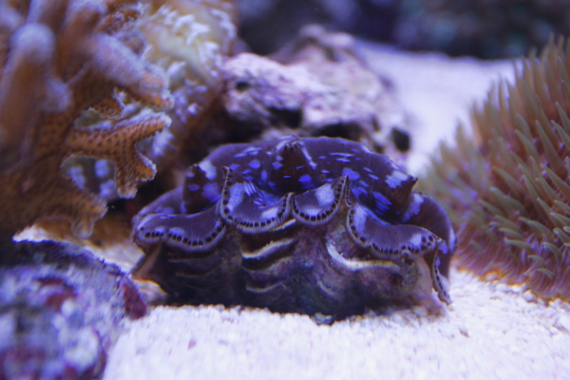 My piece of reef Img_3615