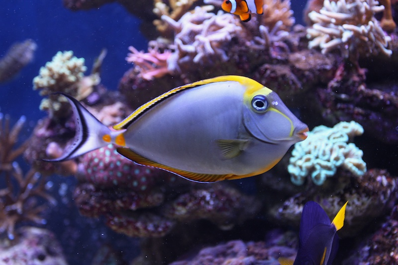 My piece of reef Img_3616