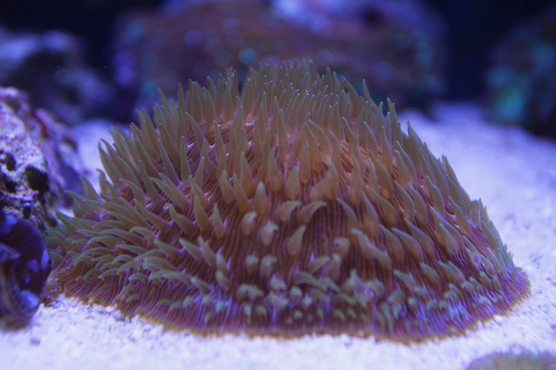 My piece of reef Img_3618
