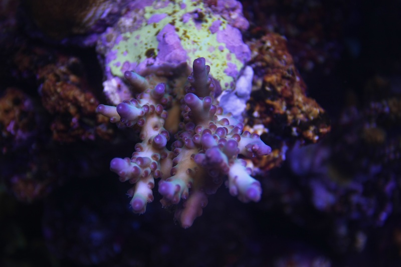 My piece of reef Img_3620
