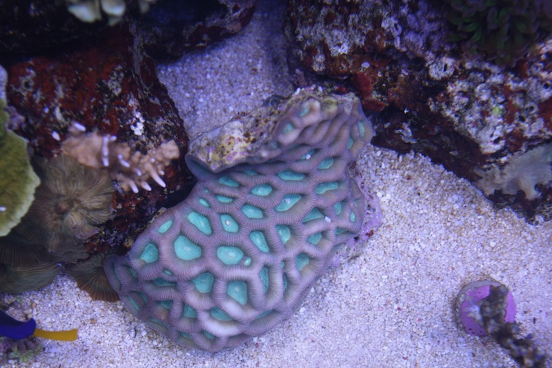 My piece of reef Img_3623