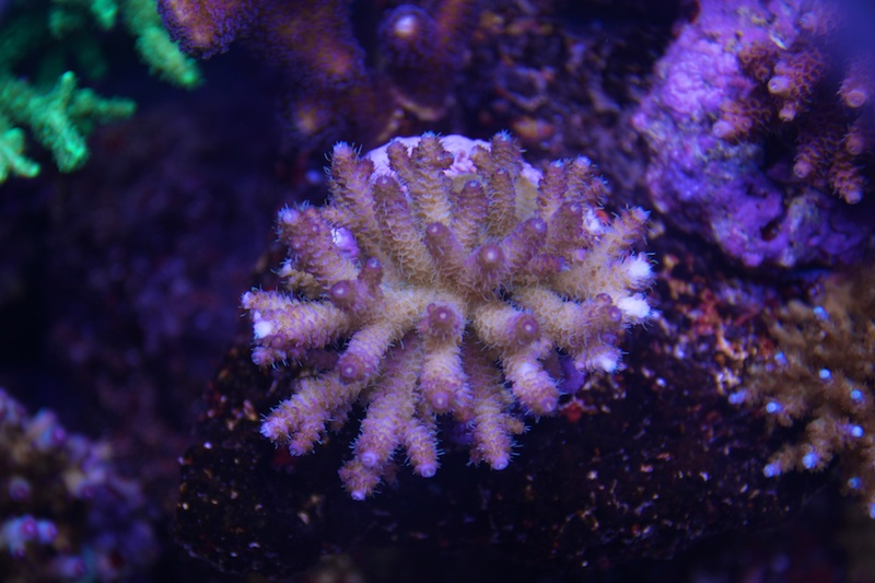My piece of reef Img_3624