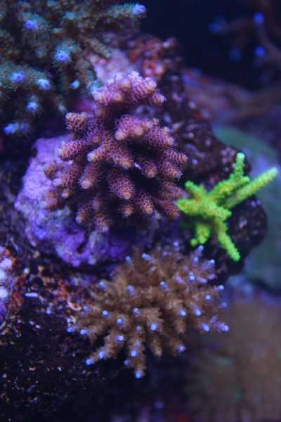 My piece of reef Img_3625