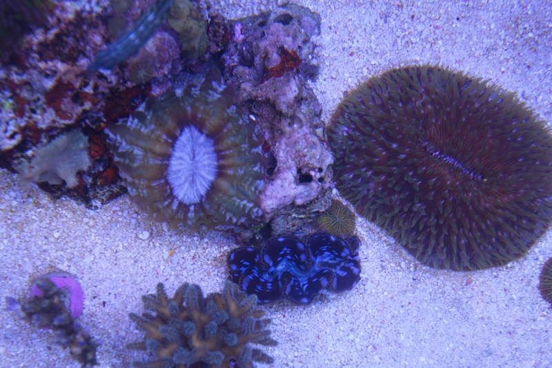 My piece of reef Img_3626