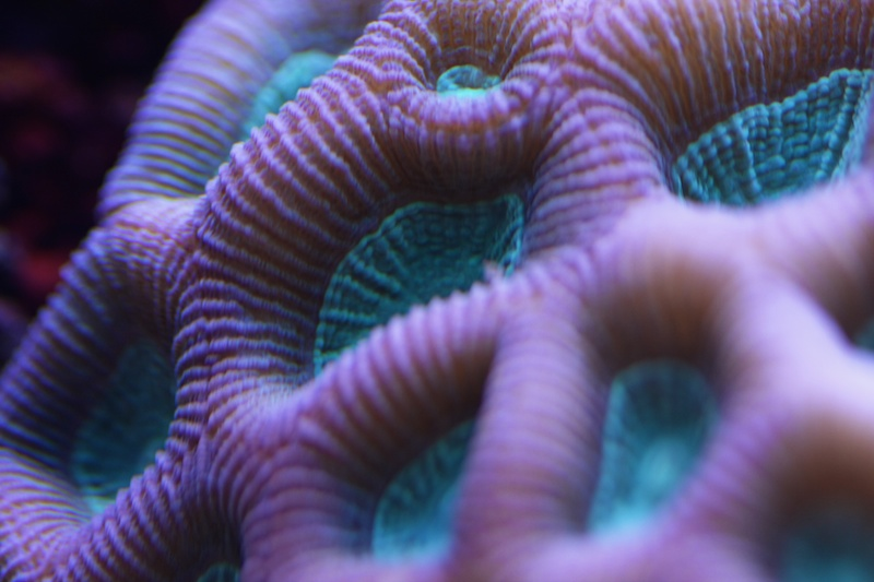 My piece of reef Img_3713