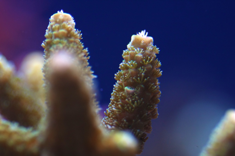 My piece of reef Img_3718