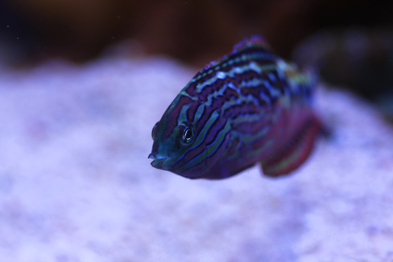 My piece of reef Img_3725