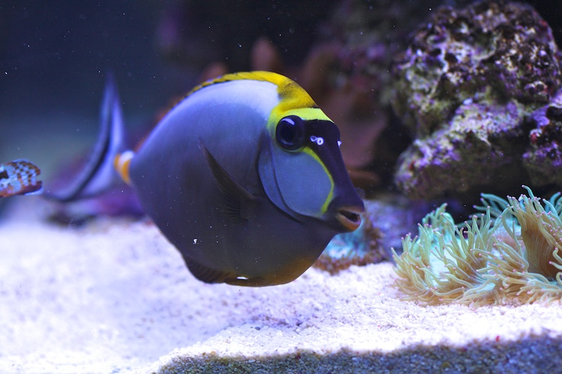 My piece of reef Img_3727