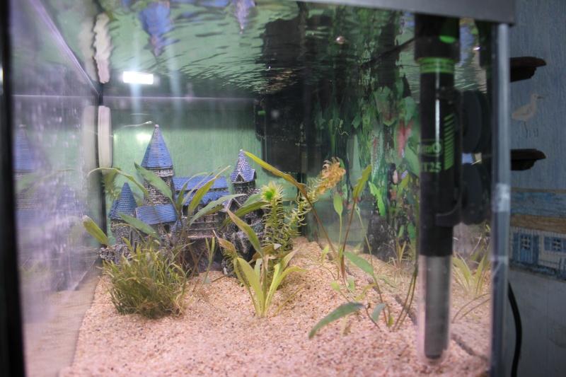 Un nouveau aquarium de 35 L Img_3214