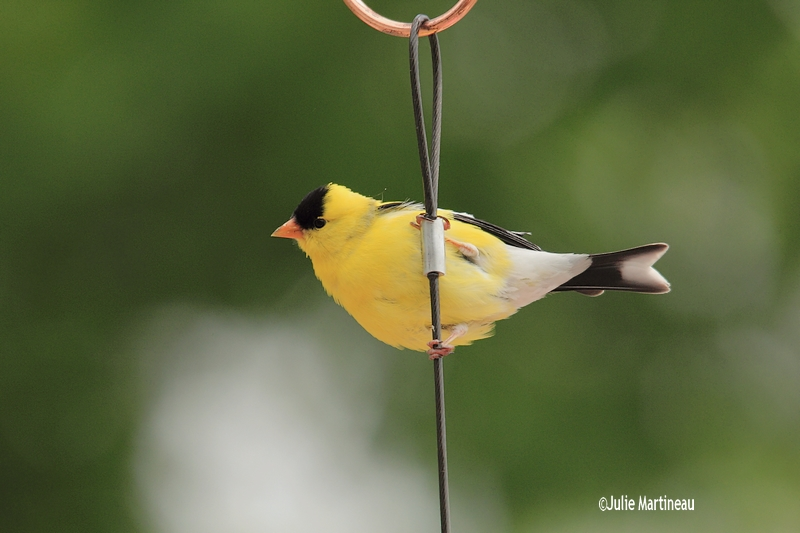 Colibri Img_5011