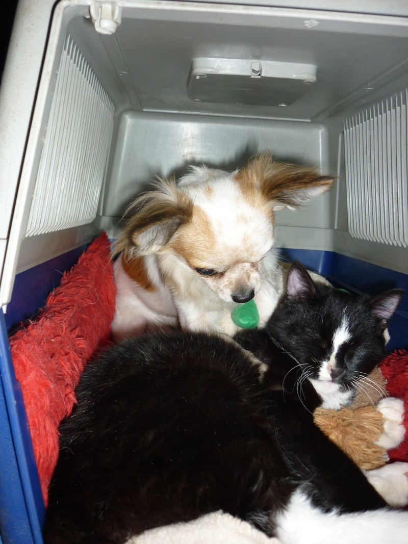 photos de vos chiens et de leurs copains de tous genres  00210