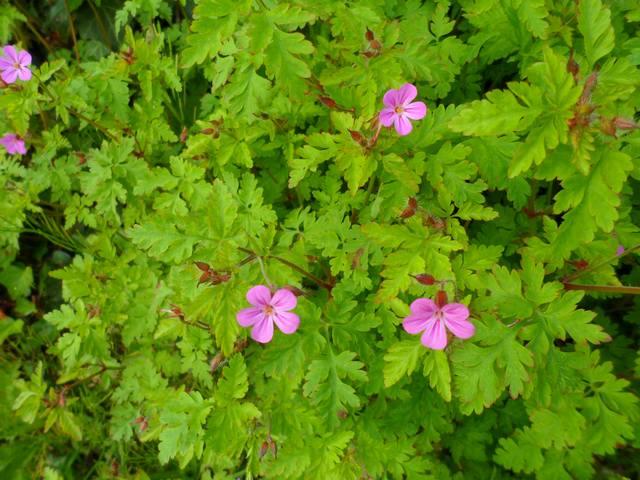 Fleurs d'extérieur - Page 5 00213