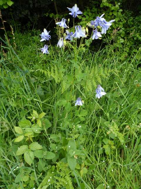 Plantes et fleurs sauvages de nos régions 02710
