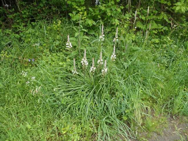 Plantes et fleurs sauvages de nos régions 02810