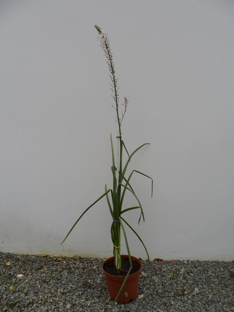 Plantes et fleurs sauvages de nos régions 03210