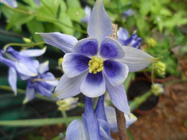 Plantes et fleurs sauvages de nos régions 03410