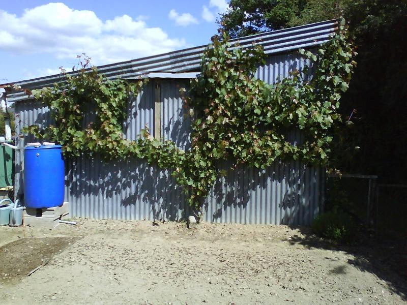 Arbres fruitiers et leur taille 2011_710