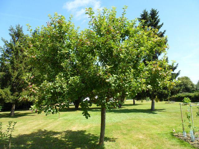 Arbres fruitiers et leur taille 2012_p10