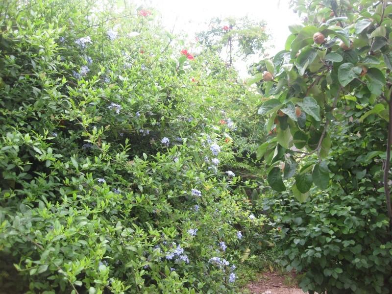 un peu du jardin Asilix14