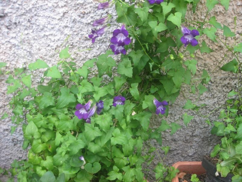 des fleurs  Blecle11