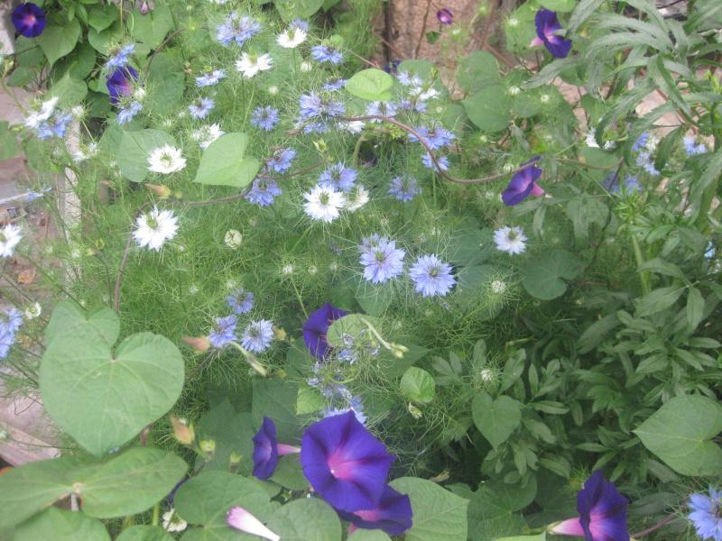 des fleurs  Blecle12