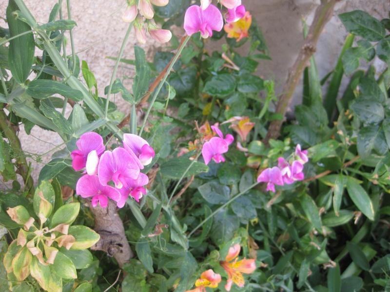 un peu du jardin Blecle35