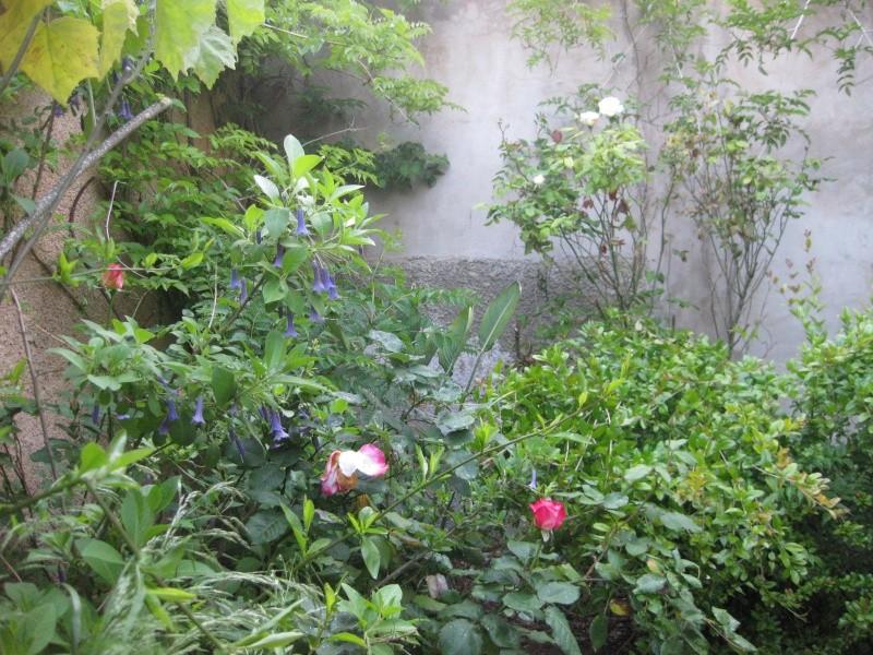 un coin du jardin et quelques rosiers Bleu_022